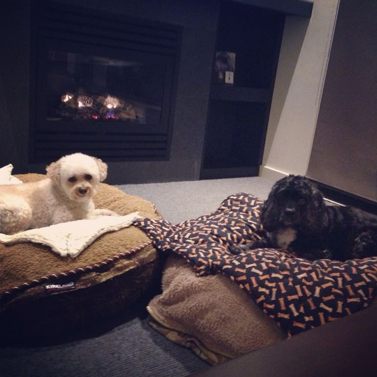Max and Sophie relaxing in front of the fire.