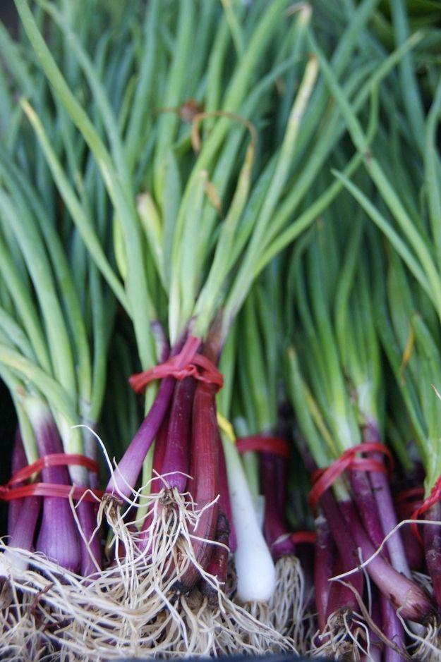 Scallions | Purple Versions Of Your Favorite Non-Purple Vegetables
