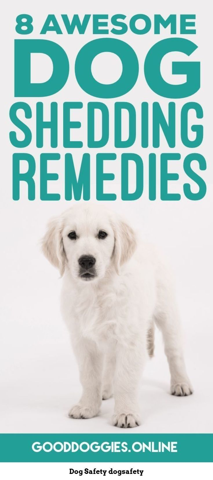 Dog Safety It S Getting Hot With Summer Almost Here Watch Out For These Signs Of A Dehydrated Dog Dog Safety Dog Shedding Remedies Dog Shedding Dog Remedies