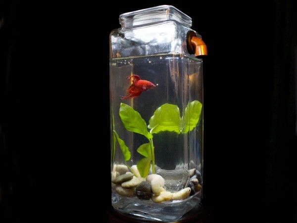 Self-Cleaning Aquarium from NoClean Aquarium The IDEA is good...the tank is TOO SMALL!