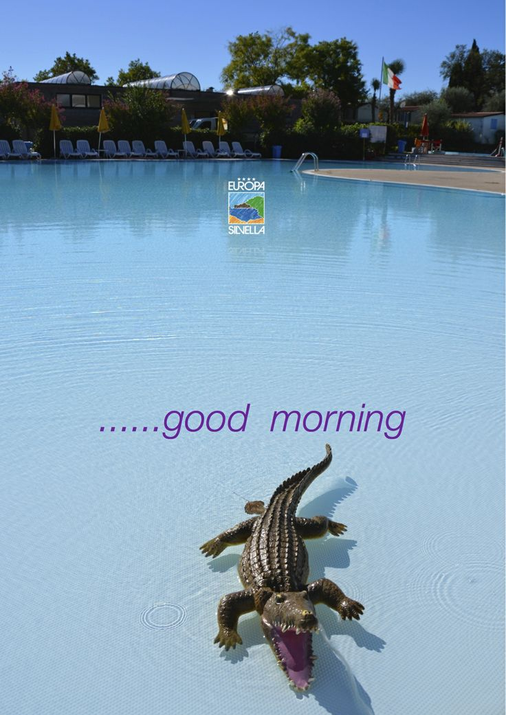 Europa Silvella.... ospite mattiniero!!!!!! ( perchè ci piace scherzare ! )