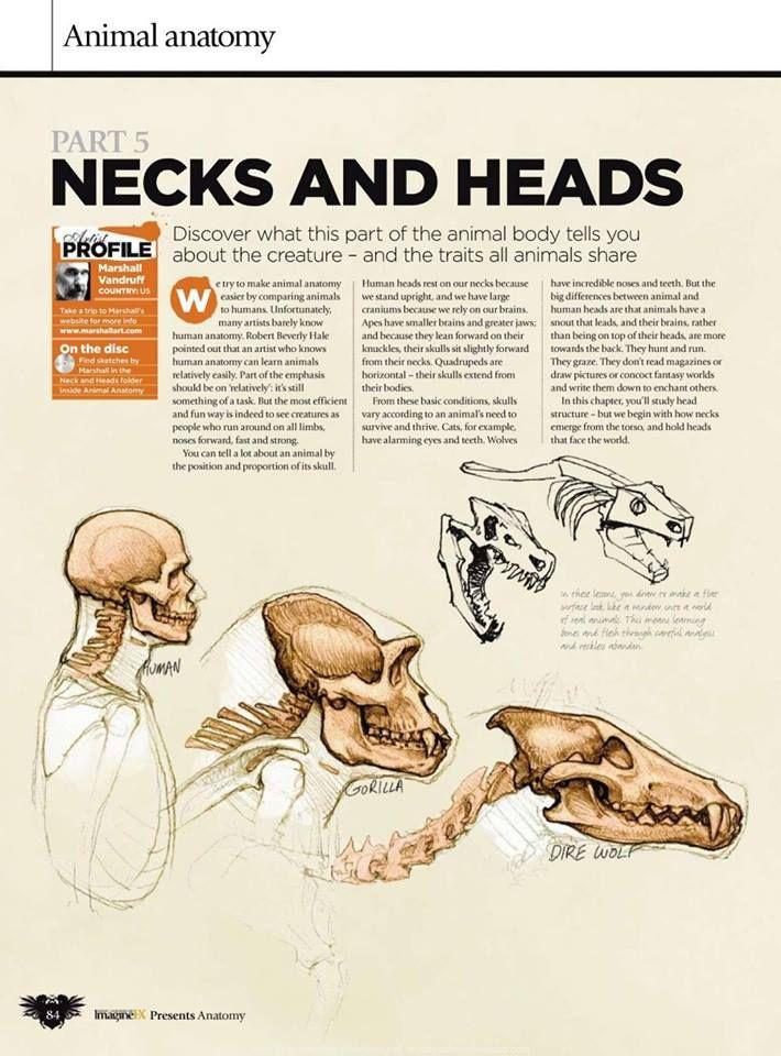 33 best Creature Anatomy   Bones images on Pinterest   Animal ...