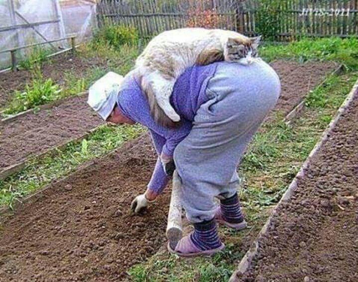 Картинки прикольные про работу в саду