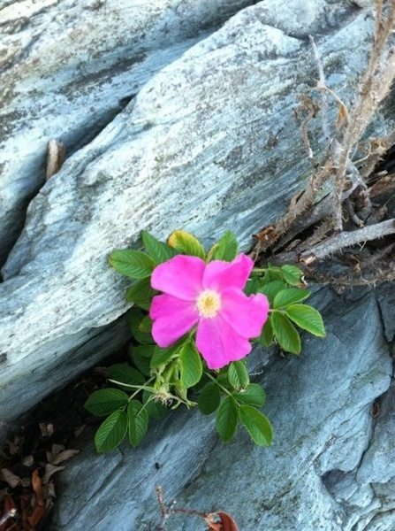 Flower: Pink Flowers, Flowers Growing, Flowers My Random, Art Flowers, Single Flowers, Fearless Flowers, Flowers Beautiful, Wild Flowers, Jacobs Flowers