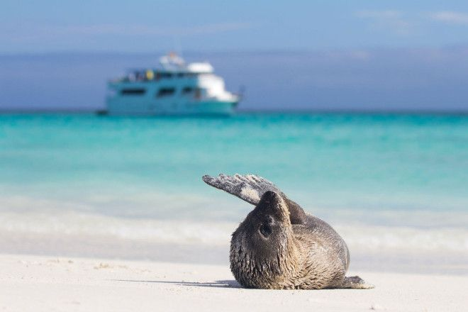 7 things you need to know before visiting the Galapagos