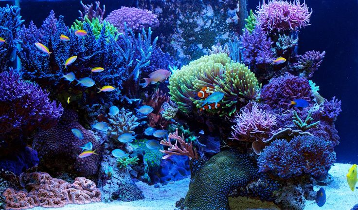 Reef aquariums made easy with friendly reef aquarium forums and more at 3reef…