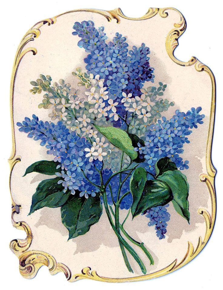 flowers-lilacs-graphicsfairy008bb.jpg (1228×1597) Vintage GRaphic blue floral