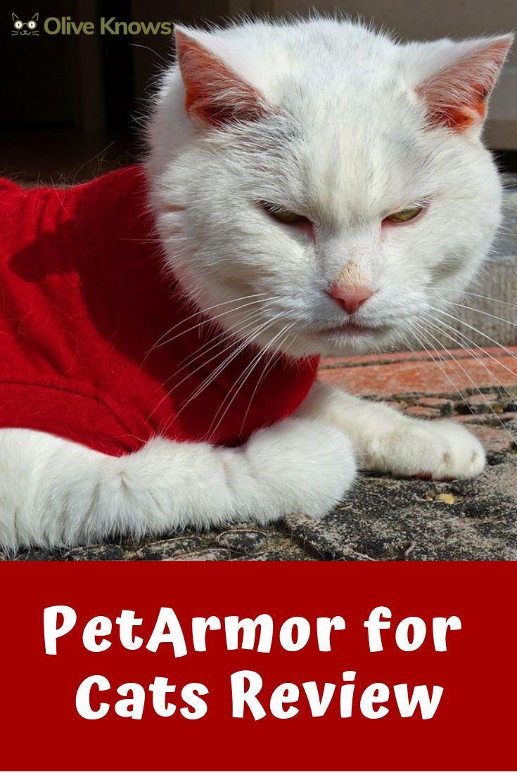 Petarmor For Cats Review Cats Cat Fleas Cat Health