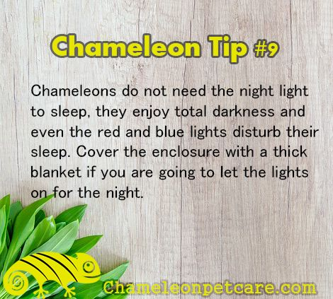 Get the best Help and Tips to care for your #chameleon . Join us on the website! #cage #light