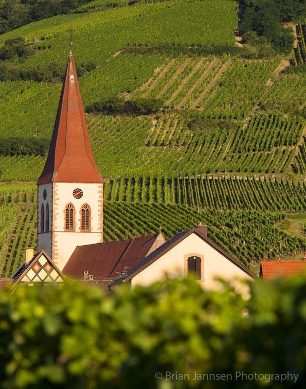 Ammerschwihr Church rises above the vineyards, Alsace France.  Brian Jannsen Photography