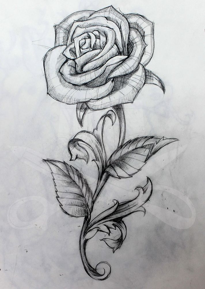 stemmed rose drawing - Google Search