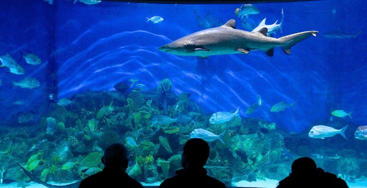 Sea-life Aquarium