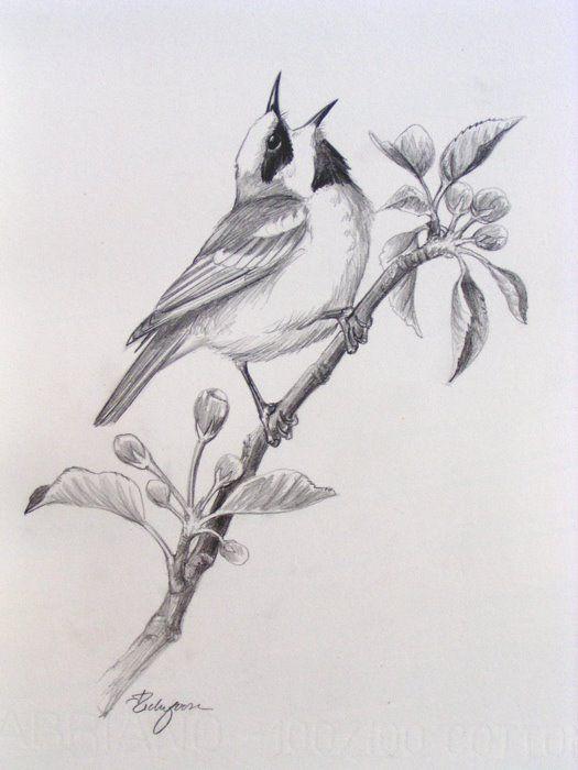 bird pencil drawings - Google zoeken