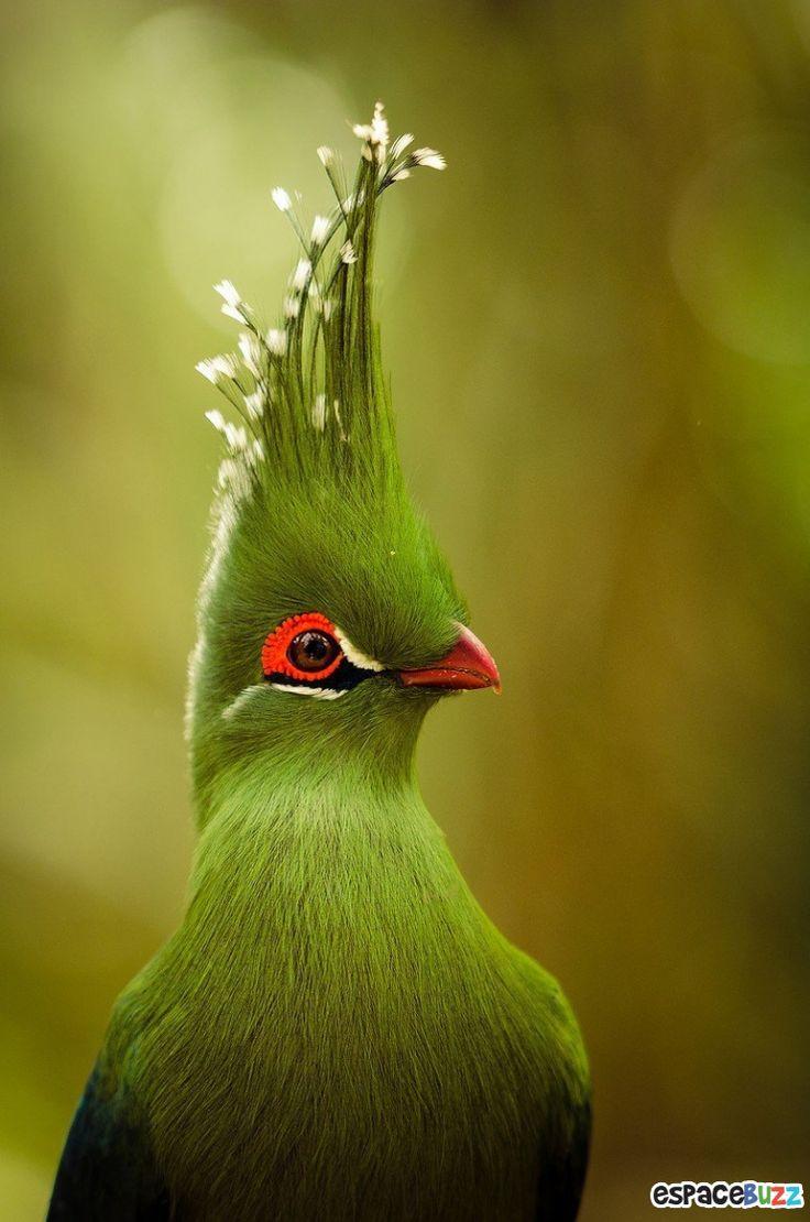 19 espèces d'oiseaux peu connues. Une véritable mosaïque animale de couleurs