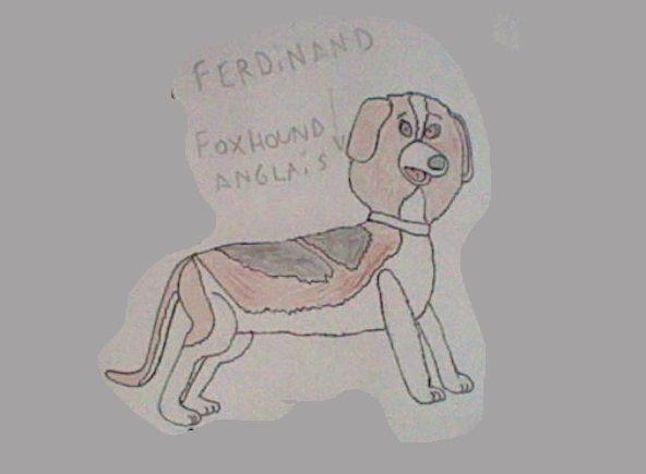 Ferdinand le foxhound Anglais