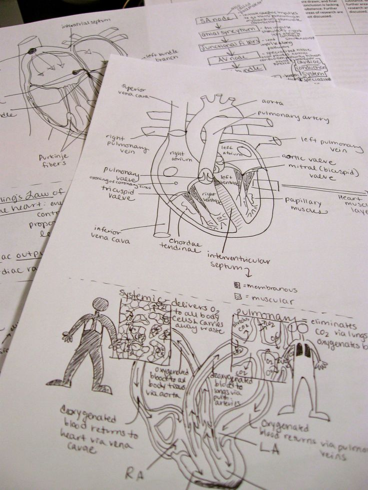 Dorable Biology Corner Anatomy And Physiology Pictures - Human ...