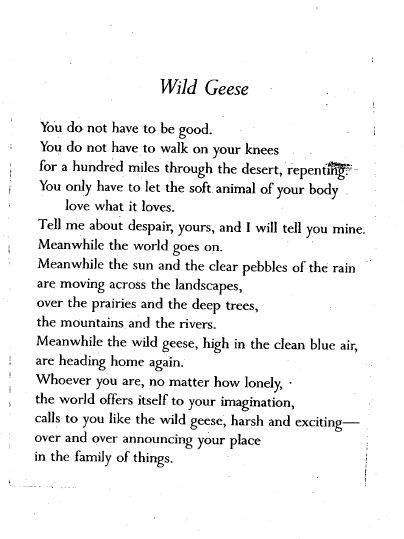 "Mary Oliver's poem, ""Wild Geese""  This has been sent to me many times by different people, and is always a beautiful reminder to just ""love what you love""."