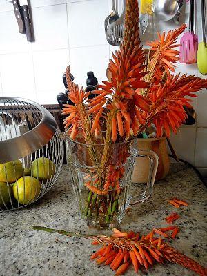 come-se: Flor de babosa para comer