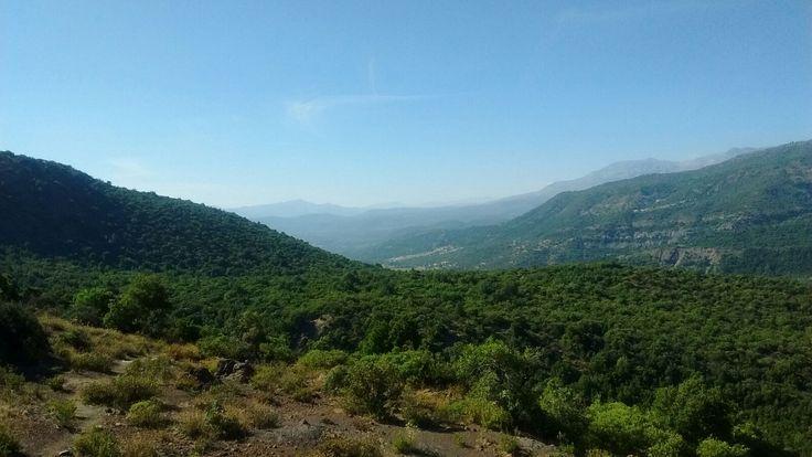 #reserva nacional #loscipreses #senderoschile #sendero La hacienda. Sexta región, #Chile