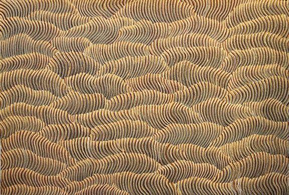 Tali – Sand Dune Country by Maureen Hudson Nampijinpa