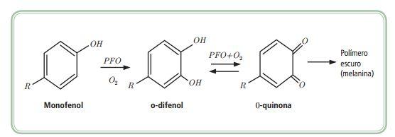 Escurecimento enzimático em alimentos | Quimica Alimentar