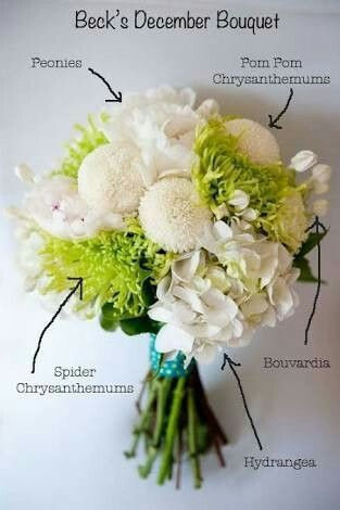 find this pin and more on tipos de flores