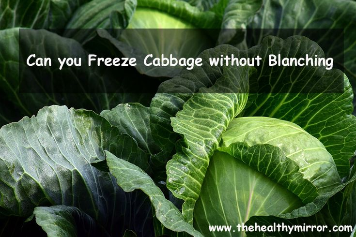 Can you freeze cabbage without blanching can you freeze