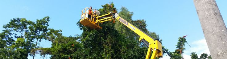 Tree lopping companies in Sydney vanguard cleaners