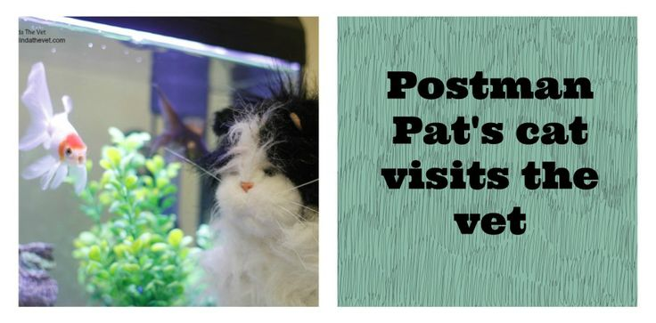 Postman Pat's Cat Jesse visited me at work on Monday with a sore leg. Read about how I made him feel better