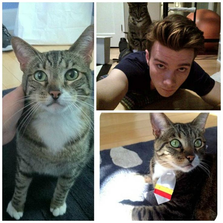 Photo of Chris Colfer & his  Cat Brian