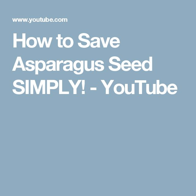 How to Save Asparagus Seed SIMPLY! - YouTube