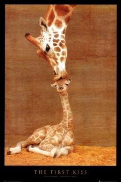 Adopt a giraffe !  wonderful gift idea!  http://www.squidoo.com/unusual-gift-ideas-adopt-a-giraffe