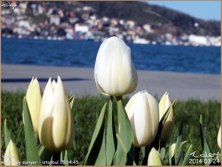 LALELER KEFELİKÖY SARIYER - İSTANBUL (K.DERE)