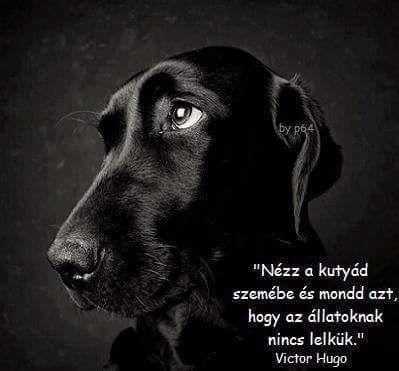 Victor Hugo idézet az állatok lelkéről. A kép forrása: Bauer György