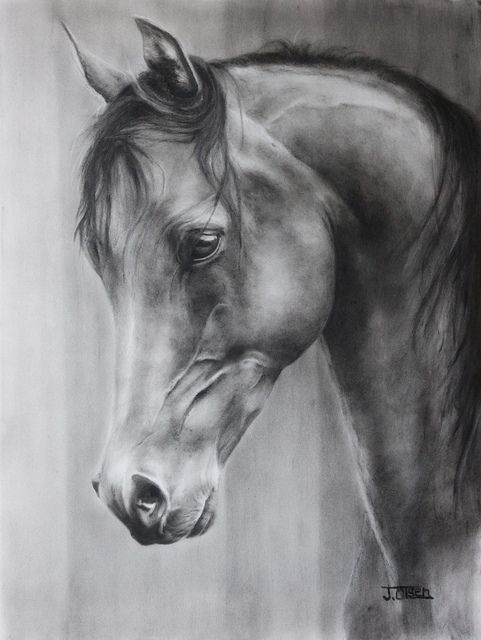 The Arabian ~ Reminds me of Sarah's beautiful drawing.