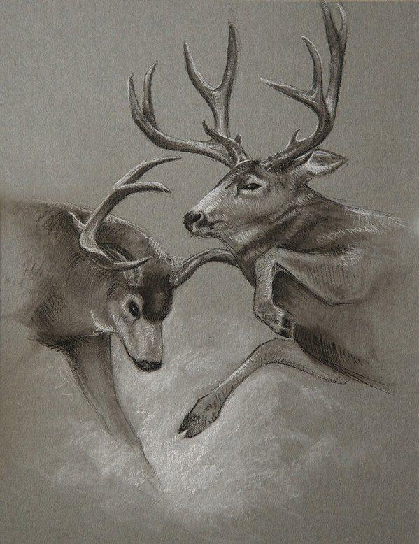 Fighting Bucks Original Sketch cbstewart.com Mule deer ...
