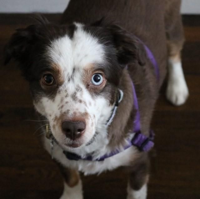 Adopt Nymeria On With Images Dog Adoption Animal Welfare Quote Dogs