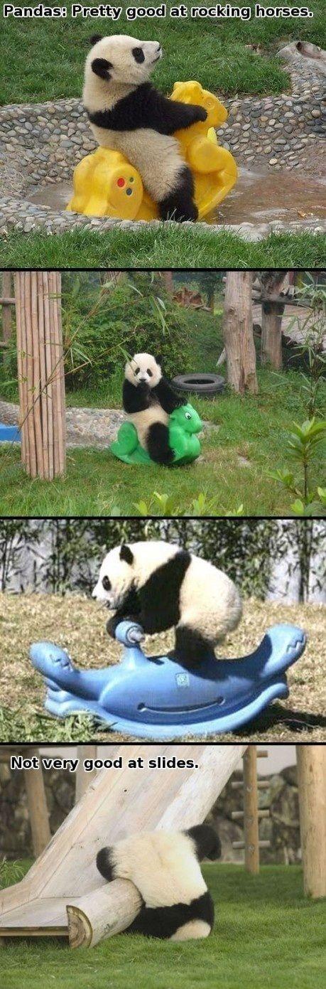 panda on a rocking horse? oh my.: Baby Pandas, So Funnies, Rocks Horses, Giggl, Cute Pandas, Pandas Bears, Humor, Smile, Silly Pandas