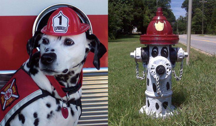 迷子のダルメシアン消防署に助けを求めるやっぱりねと言われるワケとは