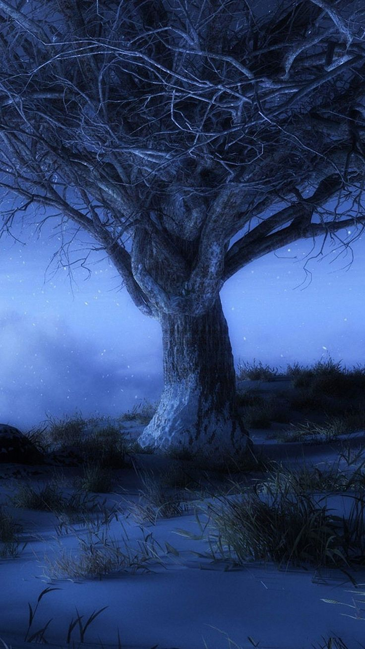 nature night hd nature wallpapers nature iphone 6 wallpapers wallpaper ...