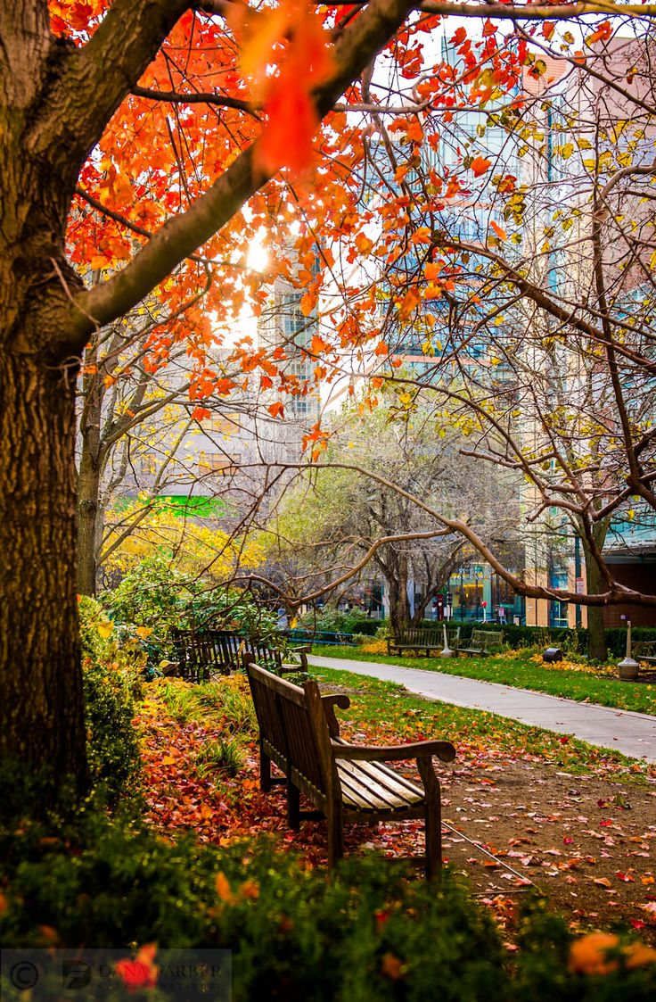 It's finally here -- #autumn in New England. Looking forward to all the fall #foliage that will be popping up around the Institute. Here's a shot from last season taken at Joslin Park, across the street from Dana-Farber.