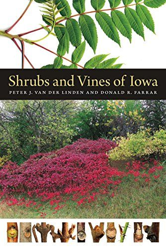Shrubs and Vines of Iowa (Bur Oak Guide):   divShrubs and vines, often literally overshadowed by trees, also receive much less attention than their taller neighbors, and yet they are very important elements of the region's natural landscape. A guide to these interesting and useful plants, this book identifies all 150 shrubs and vines native to Iowa, along with frequently seen naturalized ones. Here you'll find the widely distributed buttonbush, the distinctive pagoda dogwoods, sumacs w...
