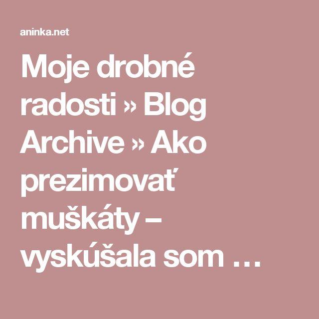 Moje drobné radosti  » Blog Archive   » Ako prezimovať muškáty – vyskúšala som …