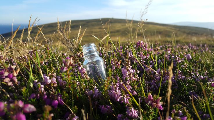 Air collected on heather hills near the sea