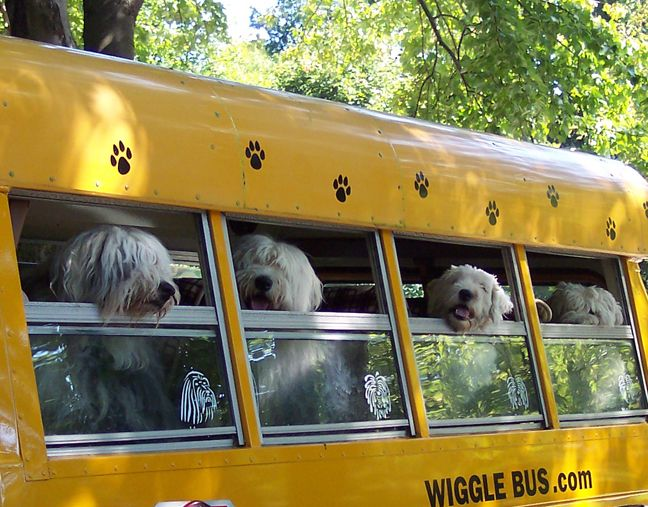 166 best Old English Sheepdogs images on Pinterest | Sheep ...