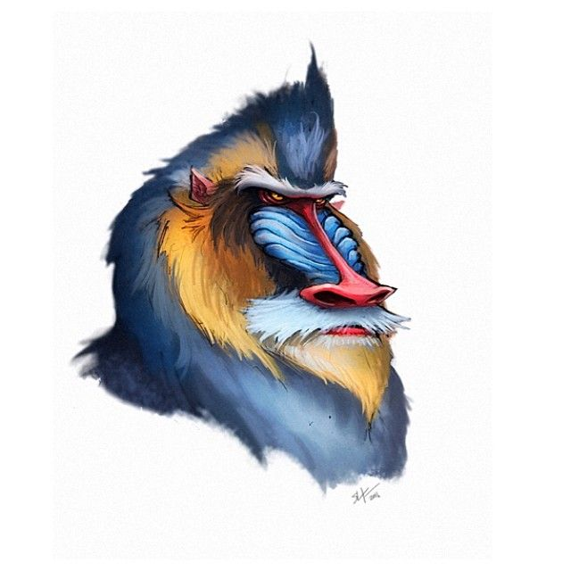 A mandrill dude for tonights painting. #mandrill #baboon #monkey #animals #conceptart #art #illustration #instaart #instagood #digitalpainting #drawing #sketch #painting