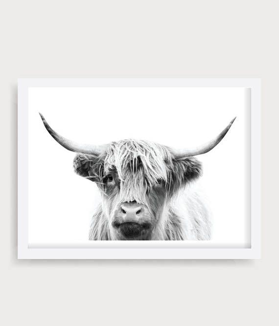 Highland Cow Wall Art Black And White Cow Print Cattle Etsy Cow Wall Art Highland Cow Cow Print