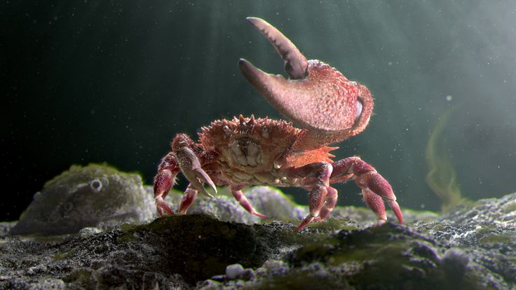 Mr. Crab, created by Christopher using ZBrush, Maya and Arnold.