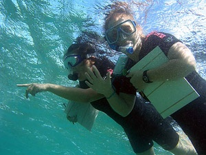 Students snorkeling as part of their educational excursion while studying with SIT Study Abroad in Australia
