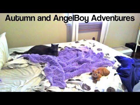 Autumn and AngelBoy Adventures Episode 1  #TheGingerNinja #cute #russianblue #kitten #video #HopeCats #AutumnAngelBoyAdventures